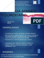 Aparato tegumentario histologia
