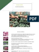 Catalogo Plantas Ornamentales