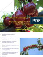 Manejos de Plantas de Cerezos