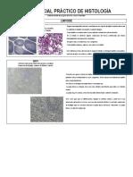 Guía Parcial Práctico de Histología Linfoide