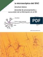 Anatomía Microscópica