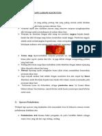 Adat & Pantang Larang Kaum Cina (1)