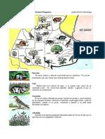 Llanura Pampeana Flora y Fauna Autóctonas
