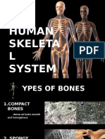 Skeletal System New