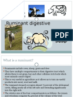 Ruminant Digestive System Ppt Pres