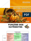 Sistema Digestivo 2012
