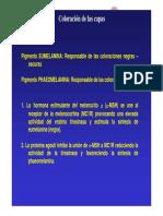 0capas_caballos-patatabrava.pdf