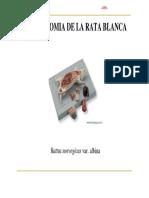 0anatomia Rata Patatabrava