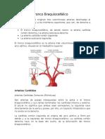 Arterias Del Tronco Braquiocefálico