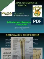 Articulacion Talocrural