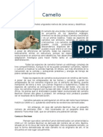 monografia de fibra de camello