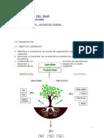 Apuntes de Cátedra Morfología Vegetal