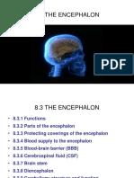 8.2. Encephalon