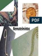 Încrengatura Nemathelminthes studiu