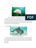 Contoh Spesies Lumba-Lumba