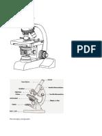 Microscopio compuesto