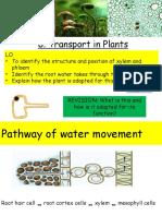 transport in plants ppt