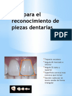 tips para el reconocimiento de piezas dentarias-120705001721-phpapp02