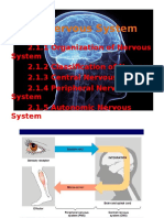 Chapter 2.1 - Nervous System