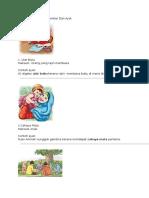 Simpulan Bahasa Bergambar Dan Ayat