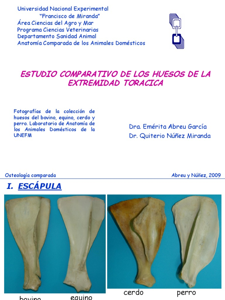 Excelente Laboratorio De Anatomía Huesos Prácticos Colección ...