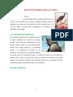 Animales en Extinsion de La Costa Sierra y Selva Del Peru