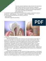 Parodontiul