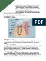 Parodontiul ref
