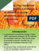 Hongos en Mango