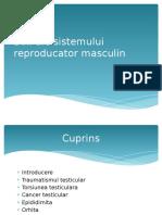 Boli Ale Sistemului Reproducator Masculin
