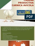 Cadena productiva de pollos parrilleros