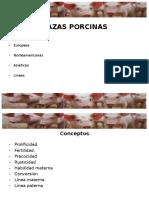 RAZAS PORCINOS