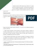Anatomia y Sistema Muscular conceptos praticos