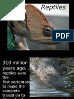 Reptiles Ppt