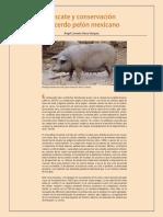 22Cerdo_pelon_mexicano.pdf