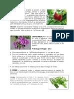 Plantas Medicinales 15 CON PREPARACION