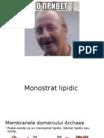 Monostrat lipidic