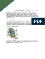 Célula y tipos y clases de celulas.docx