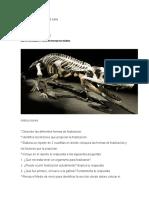 MIII-U2-Actividad 1. Cómo Se Forman Los Fósiles