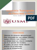 Anatomía Tomografía de Pancreas y Bazo