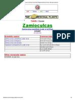 Zamioculcas _ ZZ Plant _ Aroid Plant_ Philippine Medicinal Herbs _ Alternative Medicine