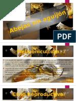 Abejas Sin Aguijón Exponer
