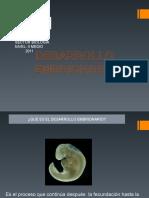 desarrollo_embrionario (1)