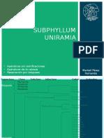 SUBPHYLLUM UNIRAMIA