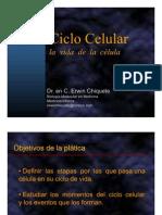 Erwin Chiquete. Ciclo celular