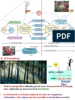 fotosíntesis, fase luminosa