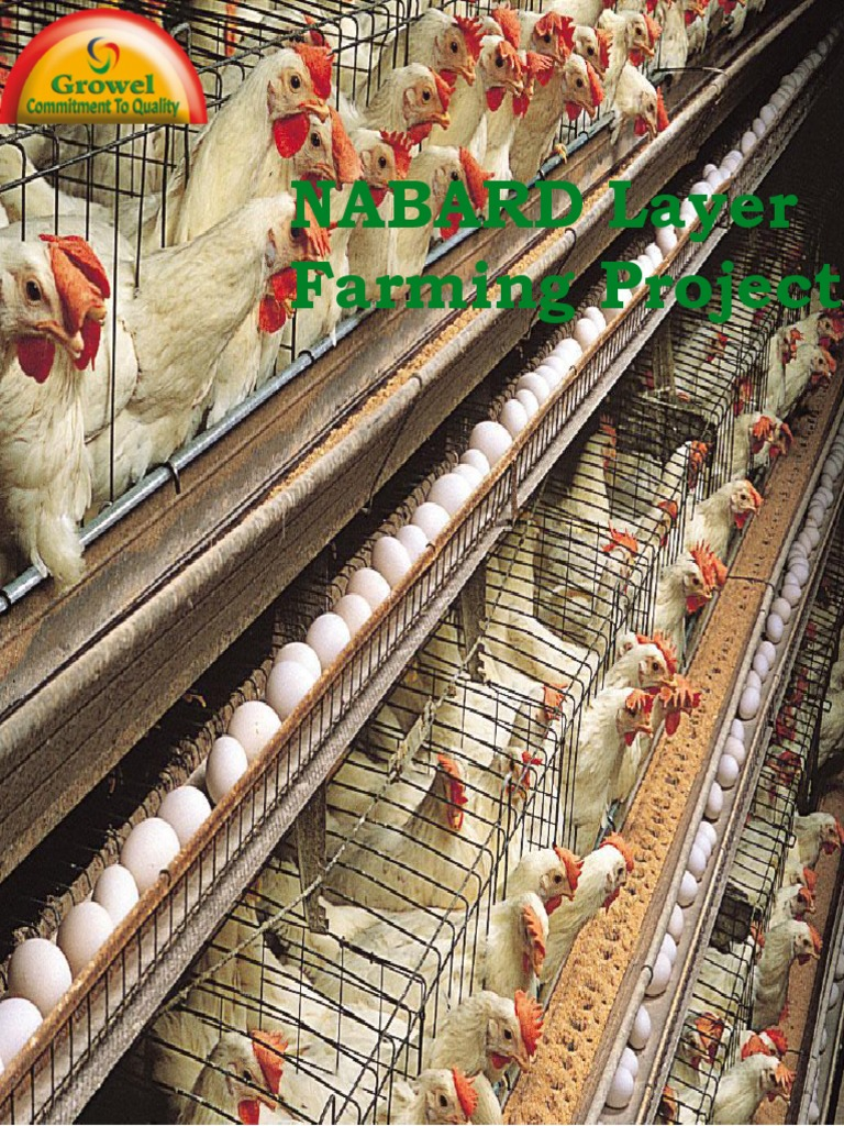 NABARD Layer Farming Project   Poultry   Poultry Farming