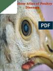 A Colour Atlas of Poultry Diseases