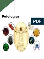patologia yamara 2