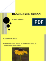 xblack-eyed susan mitsu and katie